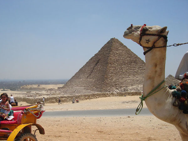 http://monami-travel.com/images/stories/gallery/cairo/camel.JPG