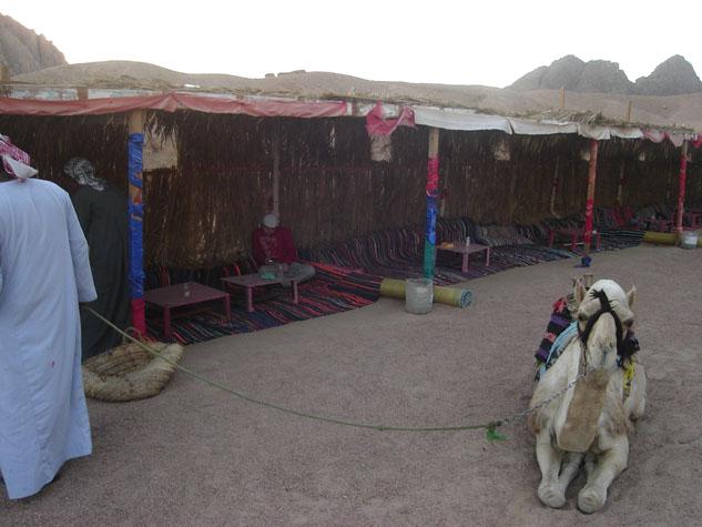 http://monami-travel.com/images/stories/gallery/sinai/camel.JPG